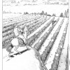 Boris Guilloteau. Bourgogne page 15